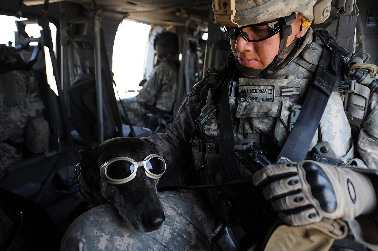 dog, goggles, military
