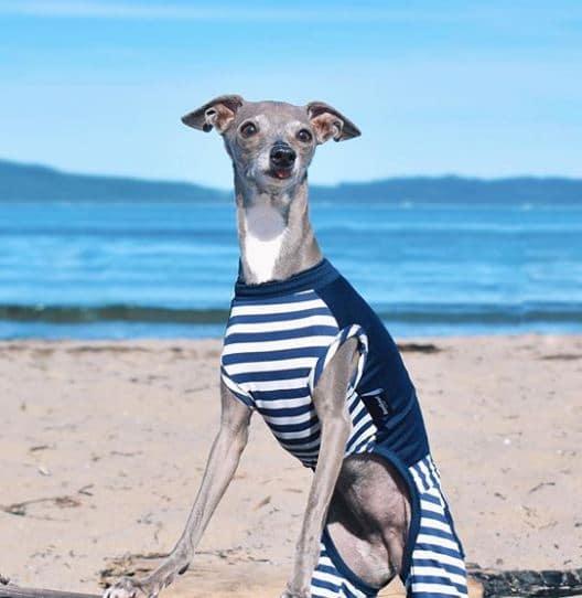 tika-at-the-beach