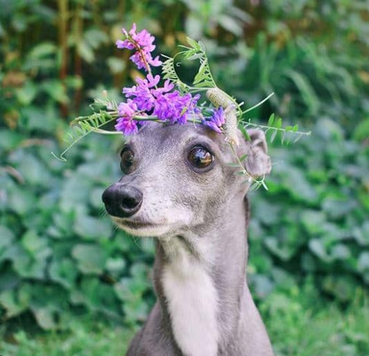 tika-flower-crown