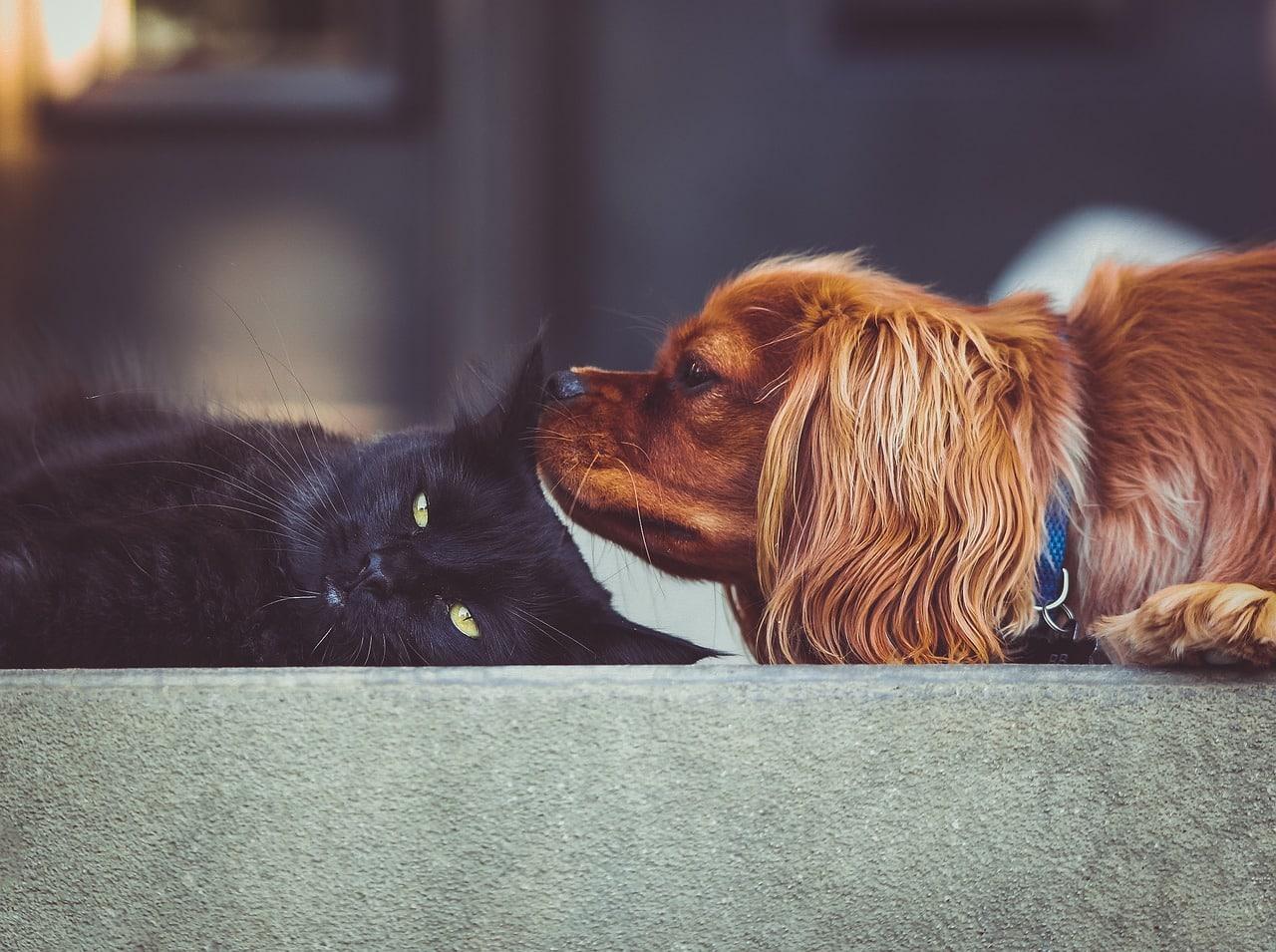 cat, kitten, dog